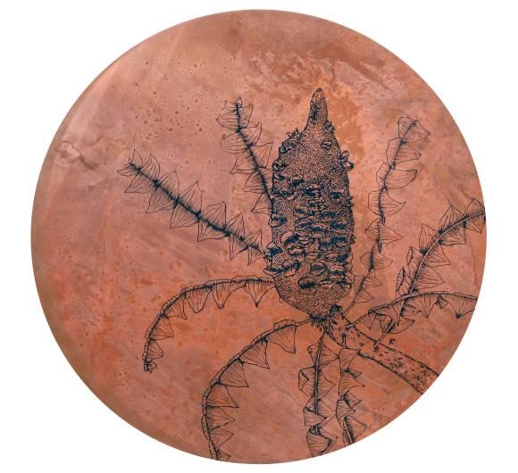 Banksia-grandis-copper-disc